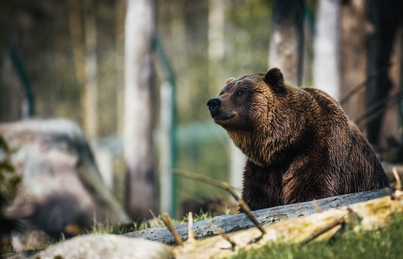 A picture of an American brown bear by Janko Ferlič